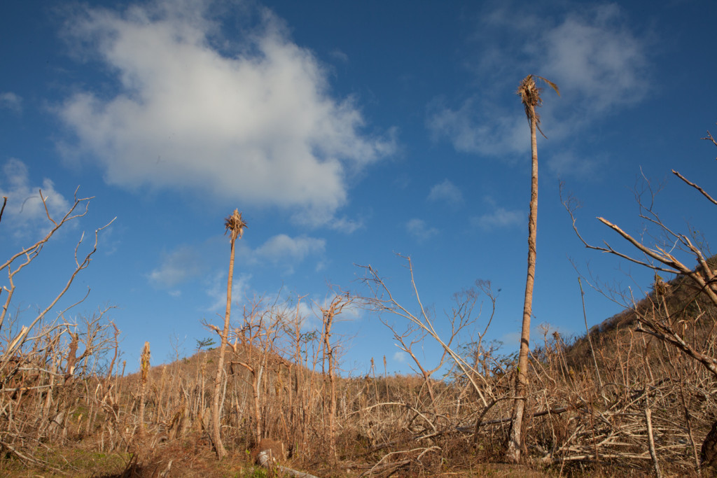 Vanuatu Forests Cyclone Pam Emily Troutman Aid Works